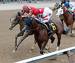 Unionizer  (no. 6) wins Race 2 Aug. 11, 2018 at the Saratoga Race Course, Saratoga Springs, NY.  Ridden by Junior Alvarado, and trained by William Mott,  Unionizer finished 1/2 lengths in front of Johny's Bobby (no. 3).  (Bruce Dudek/Eclipse Sportswire)