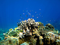 Coral Reef in Flying Fish Cove, Christmas Island, Indian Ocean