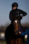 November 4, 2020: Glass Slippers, trained by trainer Kevin A. Ryan, exercises in preparation for the Breeders' Cup Turf Sprint at  Keeneland Racetrack in Lexington, Kentucky on November 4, 2020. Alex Evers/Eclipse Sportswire/Breeders Cup