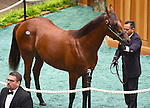 Hip no. 44, a Blame colt out of Be My Prospect, is sold at the Fasig-Tipton Yearling Sales for $600,000 to Willis Horton-D. Wayne Lukas on August 10, 2015 at the Fasig-Tipton Sales Pavilion in Saratoga Springs, New York. (Bob Mayberger/Eclipse Sportswire)