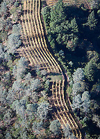 aerial view above mountain top vineyard rows autumn Sonoma county Califonia