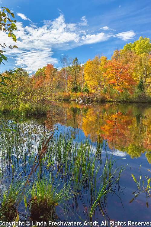 Autumn on the East Fork of the Chippewa River in northern Wisconsin (Chequamegon National Forest is on the other side of the river).