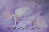 Franco, FLOWERS, BLUMEN, FLORES, paintings+++++,ITZP05,#f#, EVERYDAY