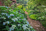 Vashon-Maury Island, WA: Brick pathway through summer perennial shade garden featuring Hydrangea 'Blue Deckle', Japanese forest grass, clematis, Japanese maple and lilies.