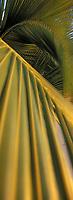 Iles Bahamas /Ile d'Andros/South Andros: détail des palmiers de la plage de 'Eco-Lodge-Tiamo Resort  // Bahamas Islands / Andros Island / South Andros: detail of palm trees at the beach of 'Eco-Lodge-Tiamo Resort