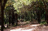 Domaine de l'Hortus. Pic St Loup. Languedoc. France. Europe. Forest on the hillside.