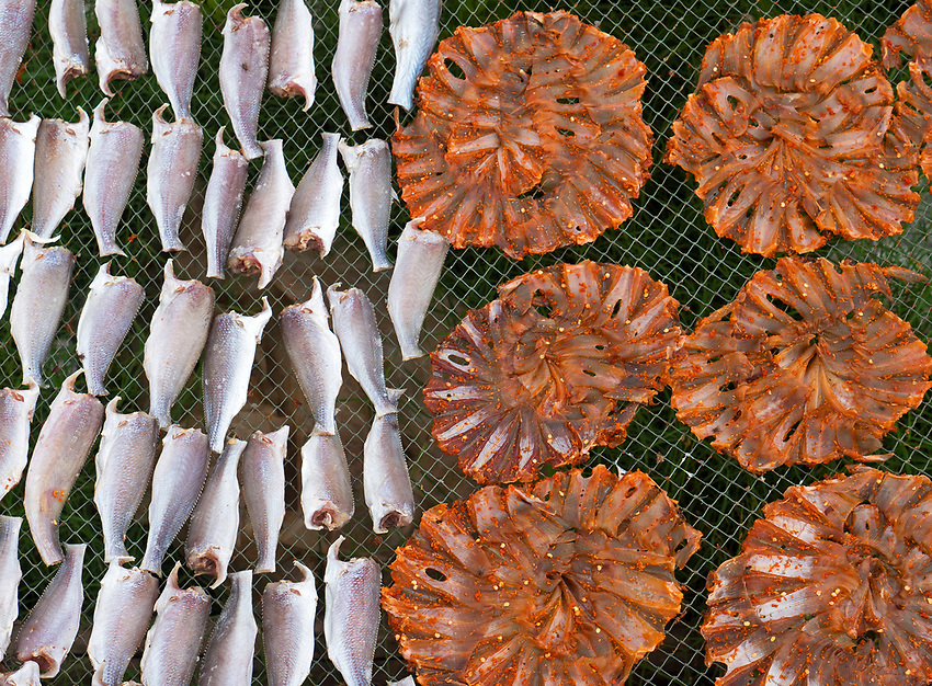 Drying fish, Bac Lieu, Mekong Delta,Vietnam
