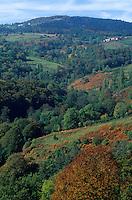 Europe/France/Rhône-Alpes/42/Loire/Massif du Forez : Forêt aux environs du Col de Beal-Forez