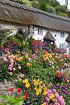 Great Britain, England, Devon, Near Sidmouth: Flower-fronted cottage | Grossbritannien, England, Devon, bei Sidmouth: Blumengarten und Landhaus