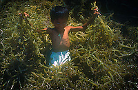 Child playing in the local Seaweed harvest, Mindanao Philippines