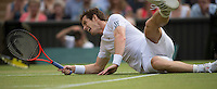 05.07.2013. The Wimbledon Tennis Championships 2013 held at The All England Lawn Tennis and Croquet Club, London, England, UK. Andy Murray dives for a drop shot during the Mens semi-finals between  Jerzy Janowicz  (POL) (24) versus Andy Murray  (GBR) [2].