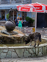 Hund trinkt am Brunnen im Bäderviertel Abanotubani, Tiflis – Tbilissi, Georgien, Europa<br /> Dog in thermal quarter Abanotuban, Tbilisi, Georgia, Europe