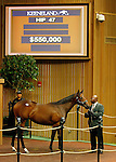 September 14, 2015: Hip 47 Distorted Humor - Achieving filly consigned by Hill 'n'Dale Sales.  Candice Chavez/ESW/CSM