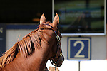 A horse checks out the tv at the Fasig Tipton November sale on November 6, 2011.