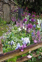 Lavender, purple, pink toned perennial garden, with fence