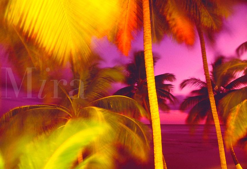 Phsychadelic palm trees. Peuto Rico