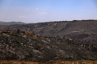 Pictured: The consumed forest in Thrakomakedones near Athens, Greece. Saturday 07 August 2021<br /> Re: Forest fire in Varibobi, in the areas north of of Athens, Greece.