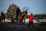 November 2, 2020: Lord North, trained by trainer John H.M. Gosden, exercises in preparation for the Breeders' Cup Turf at Keeneland Racetrack in Lexington, Kentucky on November 2, 2020. Alex Evers/Eclipse Sportswire/Breeders Cup