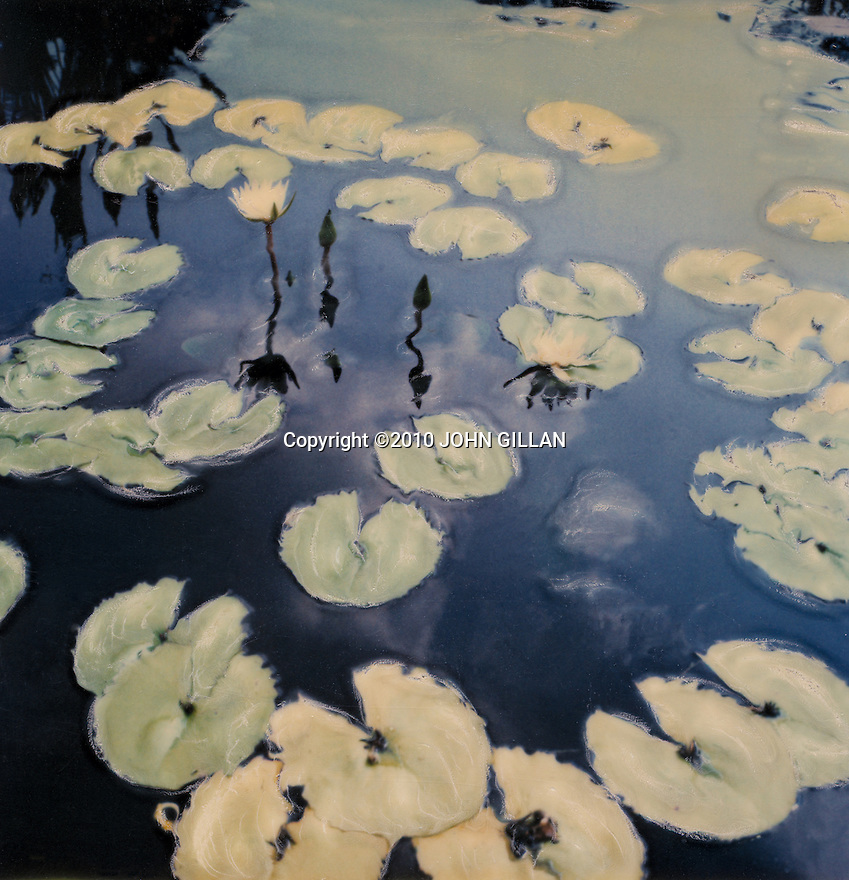 Artisitic image of lilly pads using the Polaroid SX70 etching technique.