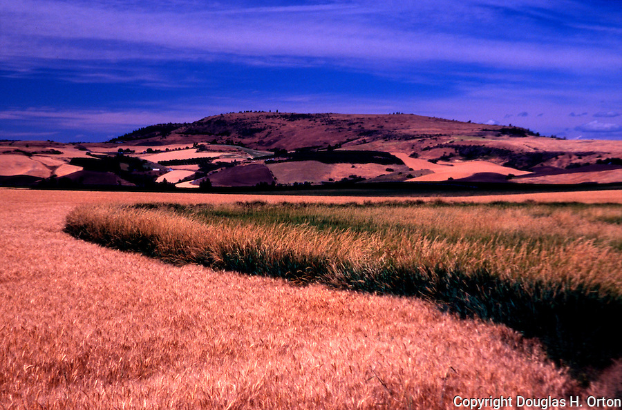 Field just outside Enterprise, Orgeon on the Hells Canyon Loop.