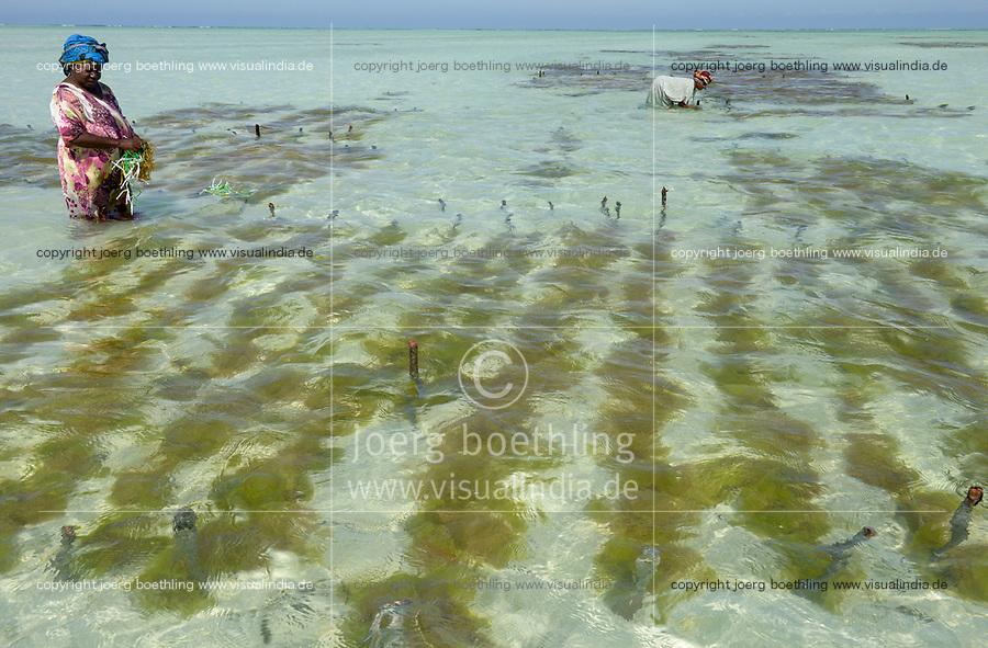 TANZANIA, Zanzibar, Paje, women plant seaweed near the beach, the red algae is used to extract carageenan as thickener for cosmetics and Food additive E 407 / TANSANIA, Sansibar, Paje, Frauen pflanzen Rotalgen am Strand, aus den essbaren Algen wird Carrageen als Emulgator und Verdickungsmittel E407 fuer Kosmetik und die Nahrungsmittelindustrie gewonnen, z.B. Eis, Cola, Syrup, Saft usw.