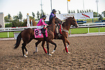 September 19, 2020: War of Will, #8, ridden by Rafael Manuel Hernandez and trained by Mark Casse heads to the post for the Grade 1 Ricoh Woodbine Mile at Woodbine Racetrack in Toronto, Ontario Canada. (Photo by Victor Biro/Eclipse Sportswire/CSM)