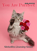 Kim, ANIMALS, REALISTISCHE TIERE, ANIMALES REALISTICOS, cats, photos,+Silver tabby kitten, Blaze, 3 months old, with a bunch of flowers on pink background.,you, are, purrfect, silver, tabby, kitt+en, with, bunch, of, flowers, on, pink, background, cats, pets, animals, kittens, portraits, red, perfect+++,GBJBWP45341,#a#, EVERYDAY