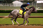 LOUISVILLE, KY - APRIL 27: Lani (Tapit x Heavenly Romance, by Sunday Silence) worked 3 furlongs in :37.4 in a reluctant manner for jockey Yutaka Take, who will ride him in the Kentucky Derby. Owner Ms. Yoko Maeda, trainer Mikio Matsunaga. (Photo by Mary M. Meek/Eclipse Sportswire/Getty Images)