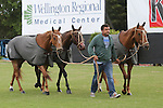 WELLINGTON, FL - MARCH 05: Orchard Hill polo ponies arrive to play in the C V Whitney Cup Final as Valiente defeats Orchard Hill 14-11,  at the International Polo Club, Palm Beach on March 05, 2017, in Wellington, Florida. (Photo by Liz Lamont/Eclipse Sportswire/Getty Images)