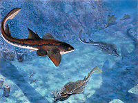 illustration of Protospinax, one of the earliest relatives of modern rays, the 1.5 meter form shares the seas with other flattened sharks, Late Jurassic, 150 MYA, South Germany, prehistoric marine life