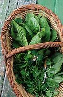 """Europe/France/Languedoc-Roussillon/66/Pyrénées-Orientales/Env de Prats-de-Mollo-la-Preste: Salade du jardin et cresson à la ferme-auberge """"La Costa de Dalt"""""""