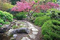 Stone path and flowering cherry tree in garden. Lithia Park, Ashland, Oregon