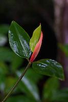 Mangroves Palawan