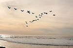 Birds fly over the beach at low tide in La Jolla, California.
