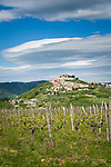 Croatia, Istria, Motovun: historical hilltop village above river Mirna surrounded by vineyards | Kroatien, Istrien, Motovun: historischer Ort im Tal der Mirna, auf einem Huegel gelegen und umgeben von Weinbergen