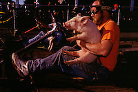 Parry Hurliman and his pig ready themselves for the take-off in the 68th running of the Pig-N-Ford races at Oregon's Tillamook County Fair. Entrants run onto the track with their wriggling pigs and with one free arm, crank-start a stipped-down Model Ford, jump behind the wheel, maneuver a clutch, shift,accelerater and brake to steer around the track for three laps, carrying three different pigs