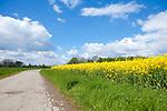 Europa, DEU, Deutschland, Nordrhein Westfalen, Niederrhein, Fruehling, Rapsbluete, Wollenstimmung, Cumuluswolken, Natur, Umwelt, Landschaft, Jahreszeiten, Stimmungen, Landschaftsfotografie, Landschaften, Landschaftsphoto, Landschaftsphotographie, Wetter, Wetterelemente, Wetterlage, Wetterkunde, Witterung, Witterungsbedingungen, Wettererscheinungen, Meteorologie, Wettervorhersage, <br /> <br /> [Fuer die Nutzung gelten die jeweils gueltigen Allgemeinen Liefer-und Geschaeftsbedingungen. Nutzung nur gegen Verwendungsmeldung und Nachweis. Download der AGB unter http://www.image-box.com oder werden auf Anfrage zugesendet. Freigabe ist vorher erforderlich. Jede Nutzung des Fotos ist honorarpflichtig gemaess derzeit gueltiger MFM Liste - Kontakt, Uwe Schmid-Fotografie, Duisburg, Tel. (+49).2065.677997, ..archiv@image-box.com, www.image-box.com]