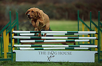 FAO JANET TOMLINSON, DAILY MAIL PICTURE DESK<br /> Pictured: A dog at the assault course Wednesday 23 November 2016<br /> Re: The Dog House in the village of Talog, Carmarthenshire, Wales, UK