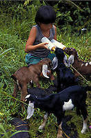 Young local boy feeding several baby goats with bottles.