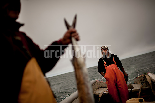 """Photo Essay on the life of the people Lafkenche, a part of the Mapuche indian nation from Southern Chile. Lafkenche mean """"peple from the sea"""", they live from Bio-Bio river towards the southern coast of the country, making a living as fishermen. Their traditions are strong and new groups of them are organizing to preserve their identityBonifacio cove, XIV Region of the Rivers. December 29, 2012. <br /> A sawfish, the only fishing after 7 hours sailing on the boat motor fiber Miguel Barrientos"""