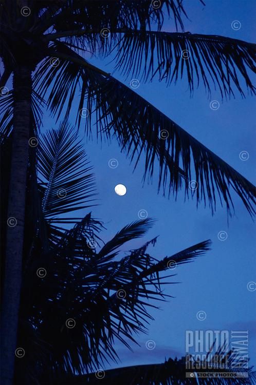 The coconut palm tree silhouette frames the blue dawn moon eastern sky near Kumukahi on the island of Hawai'i.