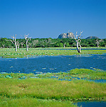 Sri Lanka, at Yala-Nationalpark | Sri Lanka, im Yala-Nationalpark, das bekannteste Naturschutzgebiet in Sri Lanka im Südosten der Insel