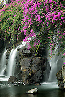 Waterfalls with boganvilla flowers. Maui, Hawaii