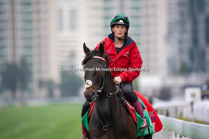 SHA TIN, HONG KONG – December 5:Prince Of Arran at trackwork on December 5 at Sha Tin Race Course in Hong Kong before starting in the Longines Hong Kong Vase. Michael McInally/Eclipse Sportswire/CSM