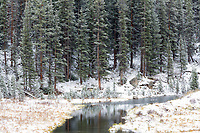 Snowy beaver pond, Independence Pass road