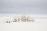 Little Bluestem grasses at White Sands