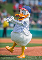 14 March 2016: Walt Disney's Donald Duck entertains the fans prior to a Spring Training pre-season game between the Tampa Bay Rays and the Atlanta Braves at Champion Stadium in the ESPN Wide World of Sports Complex in Kissimmee, Florida. The Braves shut out the Rays 5-0 in Grapefruit League play. Mandatory Credit: Ed Wolfstein Photo *** RAW (NEF) Image File Available ***