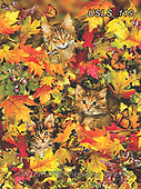 Lori, REALISTIC ANIMALS, REALISTISCHE TIERE, ANIMALES REALISTICOS, zeich, paintings+++++Autumn Kitties_2_10in_72,USLS119,#a#, EVERYDAY ,puzzle,puzzles