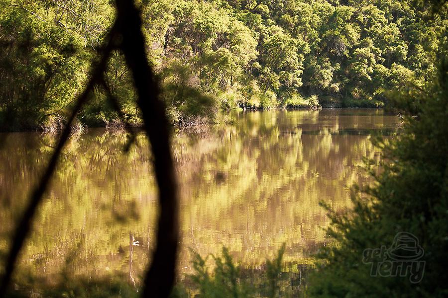 Image Ref: YV505<br /> Location: Mount Lofty, Wonga Park<br /> Date of Shot: 22.11.20