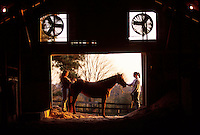 Two equine studies college students and the horse they are grooming are visible through the doorway of a barn.